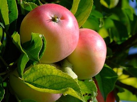 5 živil, ki imajo največjo močjo razstrupljanja